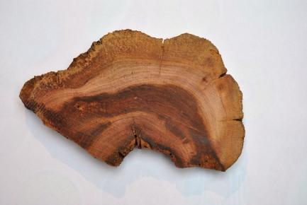 birkenbaum als deko